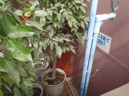 05 バルコニー隔て板周辺の障害物 鉢植え