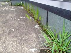 ウレタン塗膜防水工法 施工の状況2